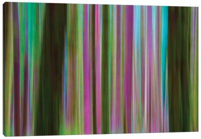 Abstract Of Hoh Rainforest At Dusk, Olympic National Park, Washington, USA Canvas Art Print