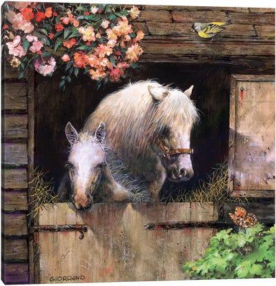 Inside The Barn Canvas Art Print