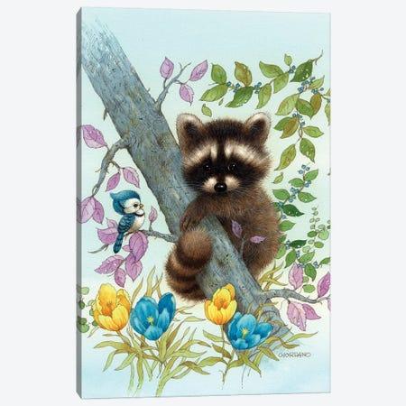 Raccoon On A Limb Canvas Print #GIO12} by Giordano Studios Canvas Print