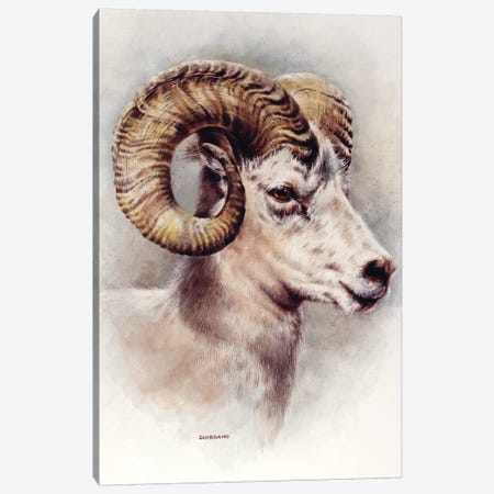 Dall Sheep Portrait Canvas Print #GIO14} by Giordano Studios Canvas Artwork