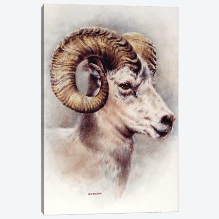Dall Sheep Portrait Canvas Print #GIO14} by Giordano Studios Canvas Artwork