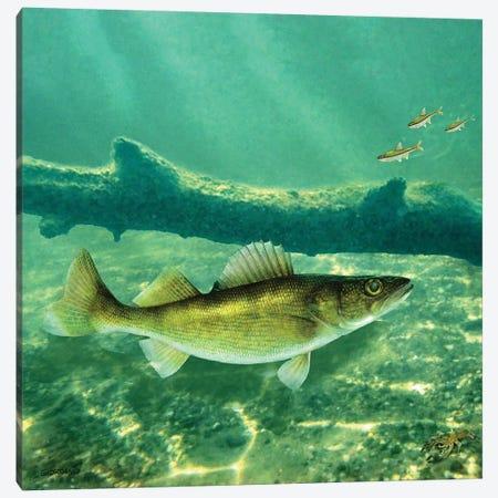 Deep Water Walleye Canvas Print #GIO158} by Giordano Studios Canvas Wall Art