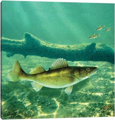 Deep Water Walleye Canvas Art Print