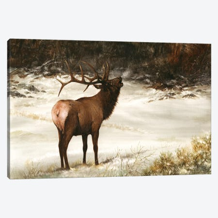 Elk Calling Canvas Print #GIO15} by Giordano Studios Canvas Wall Art