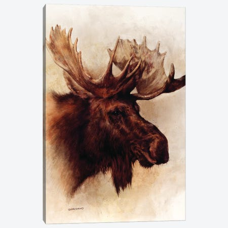 Moose Portrait Canvas Print #GIO17} by Giordano Studios Canvas Artwork
