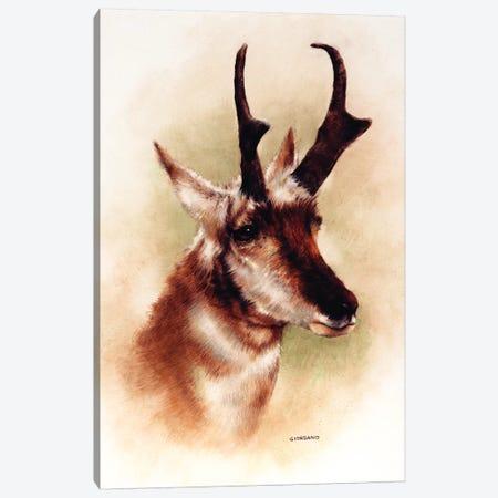 Pronghorn Portrait Canvas Print #GIO22} by Giordano Studios Canvas Wall Art