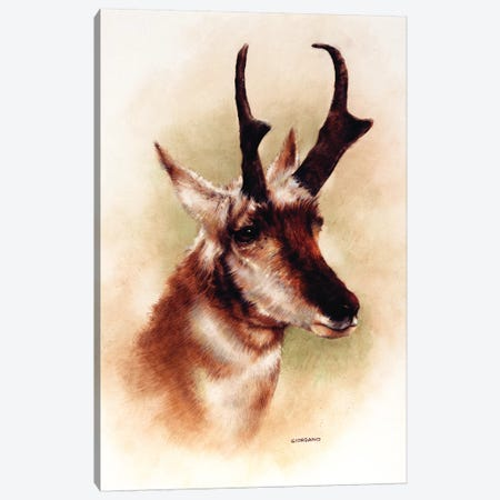 Pronghorn Portrait Canvas Print #GIO22} by Giordano Studios Canvas Wall Art