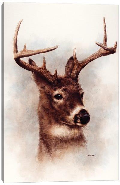 Whitetail Portrait Canvas Art Print