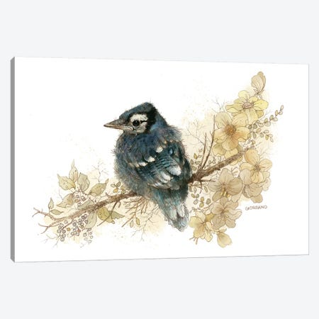 Bluejay Vignette Canvas Print #GIO32} by Giordano Studios Canvas Print