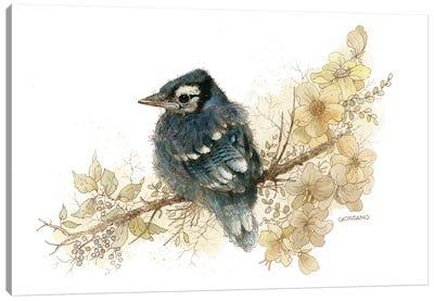 Bluejay Vignette Canvas Art Print