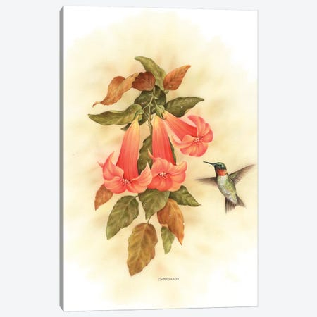 Hummingbird Delight Canvas Print #GIO35} by Giordano Studios Canvas Wall Art