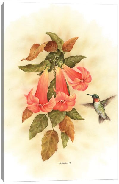 Hummingbird Delight Canvas Art Print