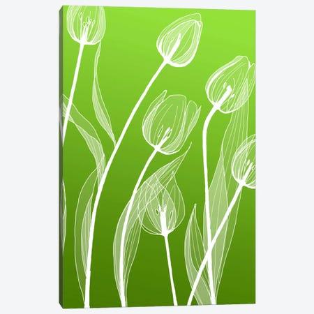 Floral IV Canvas Print #GIS8} by GraphINC Studio Canvas Print