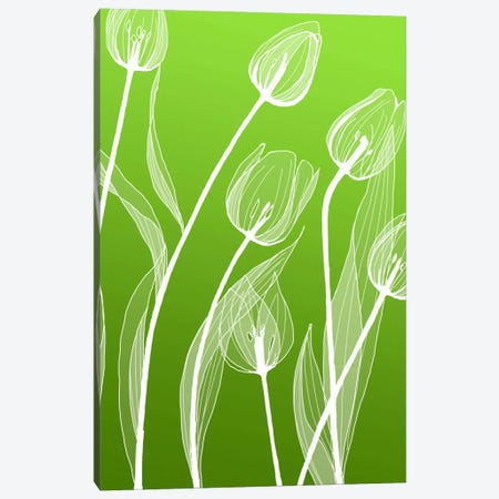 Floral IV Canvas Print #GIS8} by GraphINC Studio Canvas Print