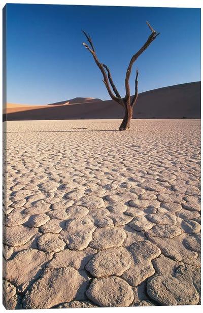 Desert Landscape, Sossusvlei, Namib Desert, Namib-Naukluft Park, Namibia Canvas Art Print