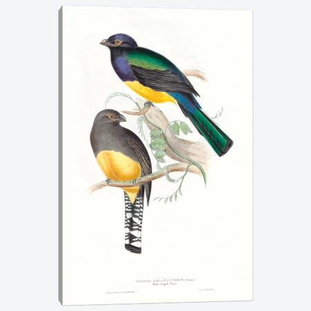 Tropical Trogons II 3-Piece Canvas #GLD11} by John Gould Canvas Artwork