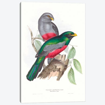 Tropical Trogons III 3-Piece Canvas #GLD12} by John Gould Canvas Art