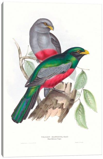 Tropical Trogons III Canvas Art Print