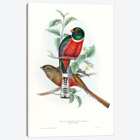 Tropical Trogons V 3-Piece Canvas #GLD14} by John Gould Art Print