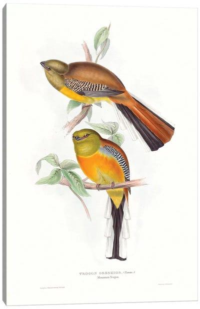 Tropical Trogons VI Canvas Art Print