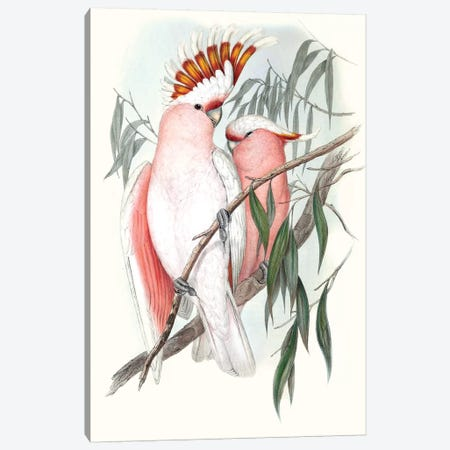 Pastel Parrots I Canvas Print #GLD1} by John Gould Canvas Art