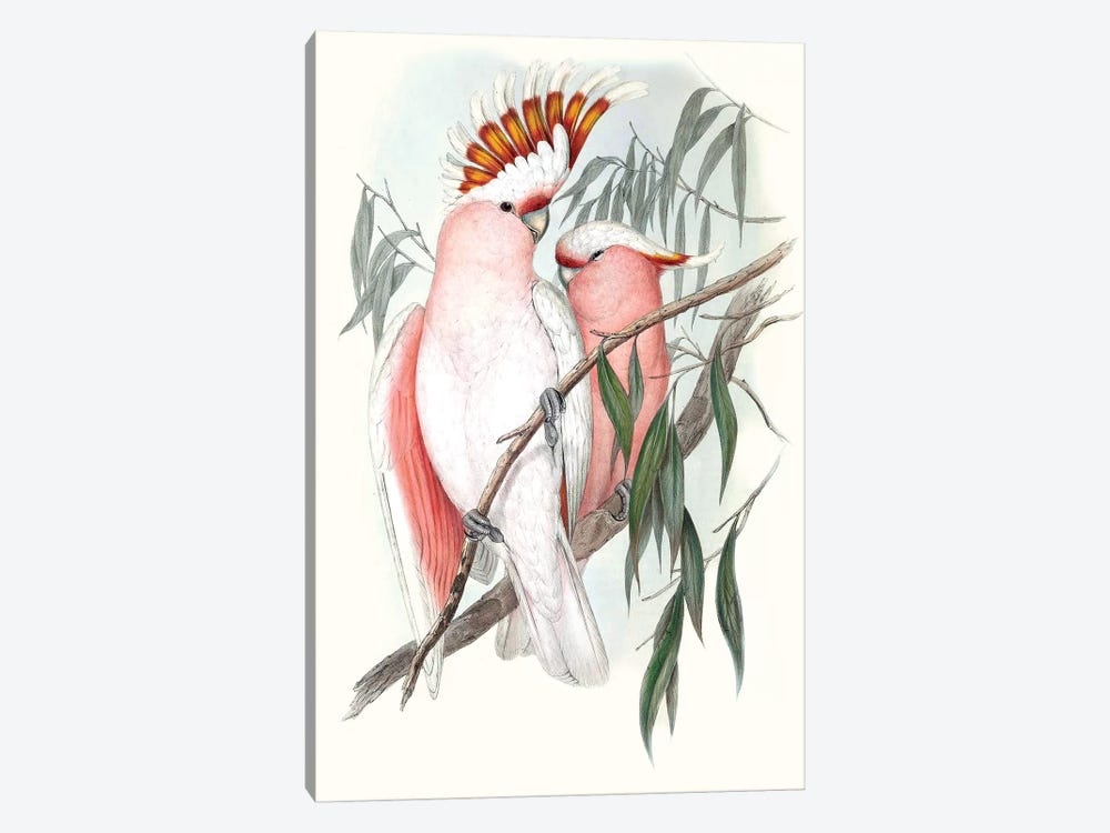 Pastel Parrots I by John Gould 1-piece Canvas Artwork