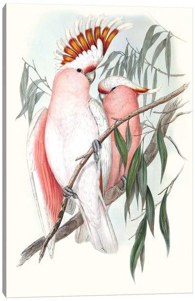 Pastel Parrots I Canvas Art Print