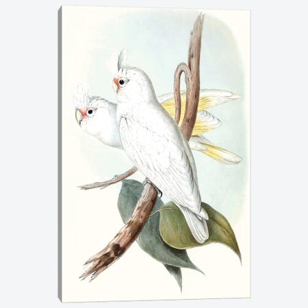 Pastel Parrots II Canvas Print #GLD2} by John Gould Canvas Art