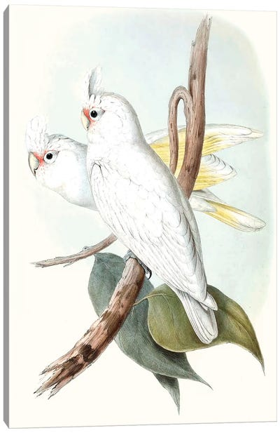 Pastel Parrots II Canvas Art Print