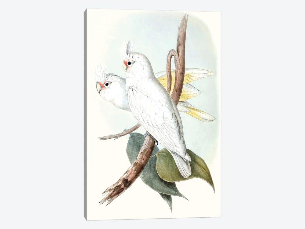 Pastel Parrots II by John Gould 1-piece Canvas Print