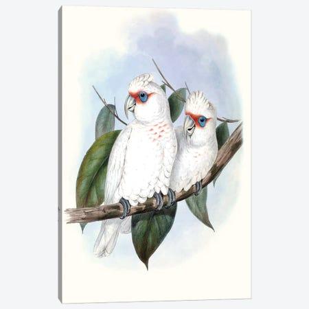 Pastel Parrots IV Canvas Print #GLD4} by John Gould Art Print
