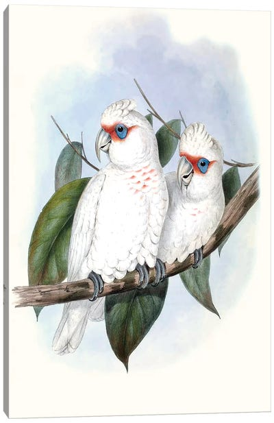 Pastel Parrots IV Canvas Art Print