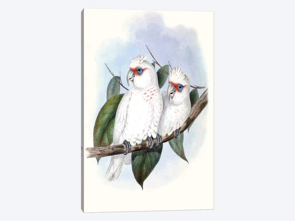 Pastel Parrots IV by John Gould 1-piece Art Print