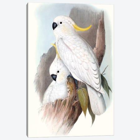 Pastel Parrots V Canvas Print #GLD5} by John Gould Canvas Print