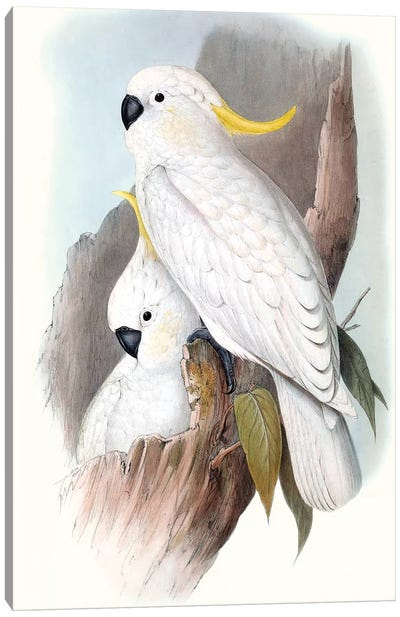 Pastel Parrots V Canvas Art Print