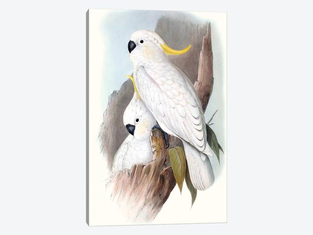 Pastel Parrots V by John Gould 1-piece Canvas Wall Art