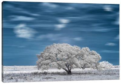 Nice Blue Sky - Bahia, Brazil Canvas Art Print