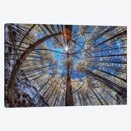 One Sun - Sao Paulo, Brazil Canvas Print #GLM118} by Glauco Meneghelli Art Print