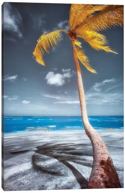 Palm Beach - Bahia, Brazil Canvas Art Print