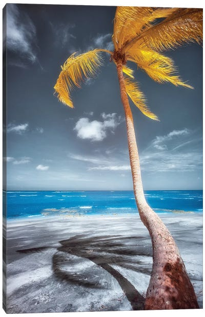 Palm Beach - Bahia, Brazil Canvas Art Print