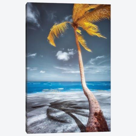 Palm Beach - Bahia, Brazil Canvas Print #GLM120} by Glauco Meneghelli Canvas Wall Art