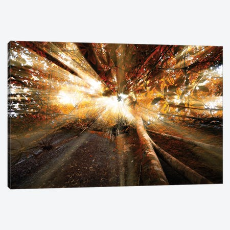 Raylight Canvas Print #GLM124} by Glauco Meneghelli Canvas Art Print