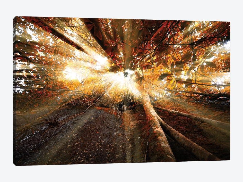 Raylight by Glauco Meneghelli 1-piece Canvas Artwork