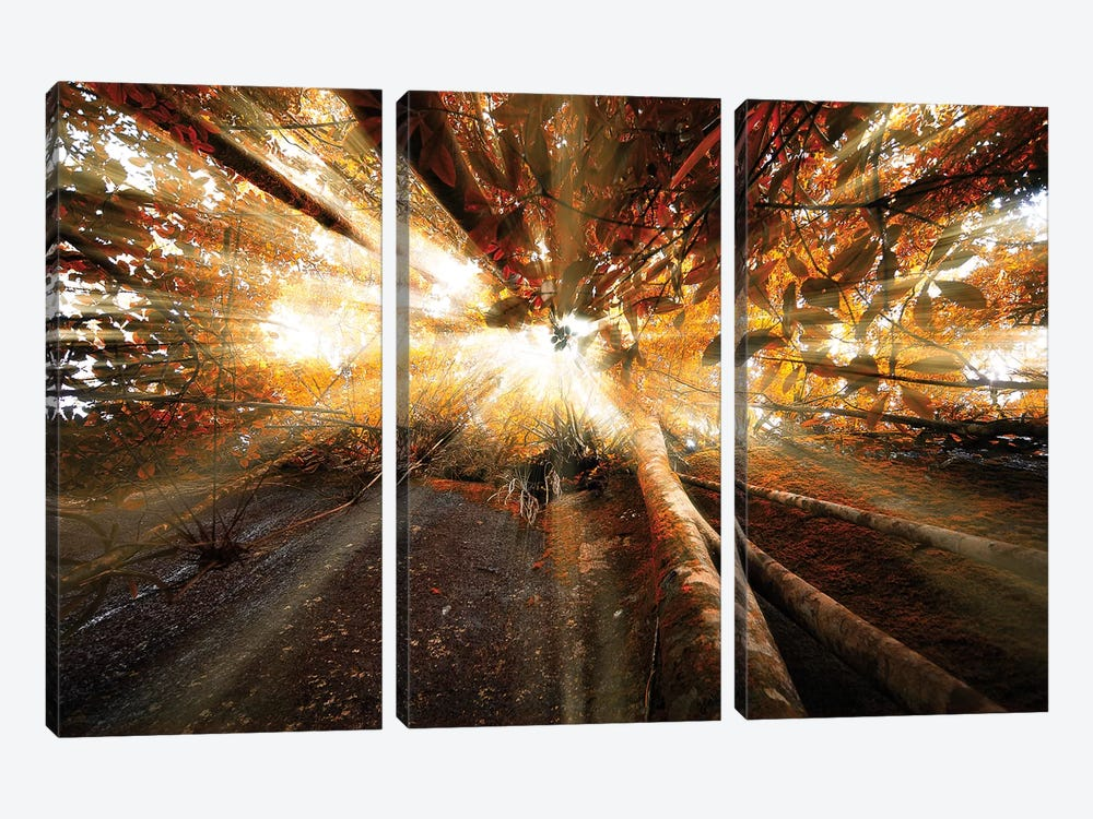 Raylight by Glauco Meneghelli 3-piece Canvas Artwork