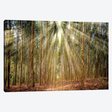 Raylight Trees Canvas Print #GLM127} by Glauco Meneghelli Canvas Print