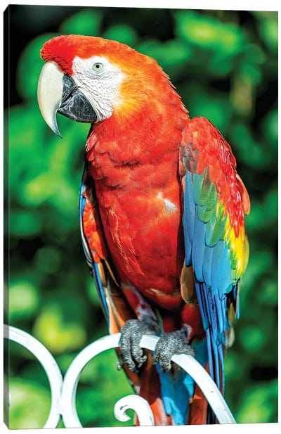 Red Macaw Canvas Art Print