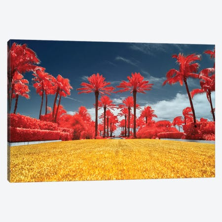 Red Palms - Miami, Florida Canvas Print #GLM130} by Glauco Meneghelli Canvas Print