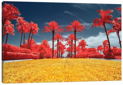 Red Palms - Miami, Florida Canvas Art Print