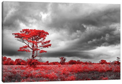 Red Tree - Sao Paulo, Brazil Canvas Art Print