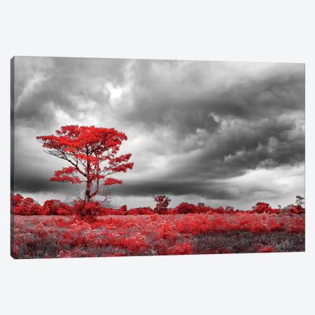 Red Tree - Sao Paulo, Brazil Canvas Print #GLM132} by Glauco Meneghelli Canvas Print